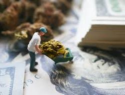 How Can Day Traders Profit from Marijuana Stocks