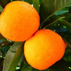 How Office Fruit Can Benefit Your Business